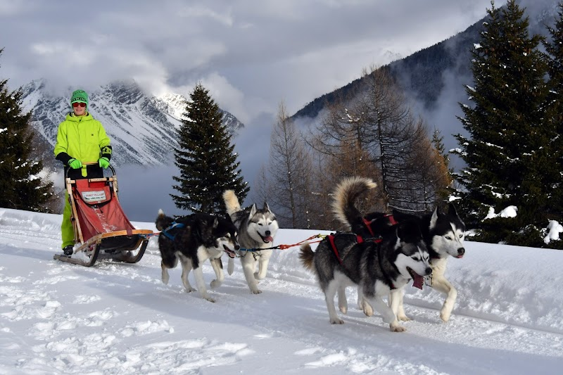 Photo de Centro Italiano Sleddog Husky Village